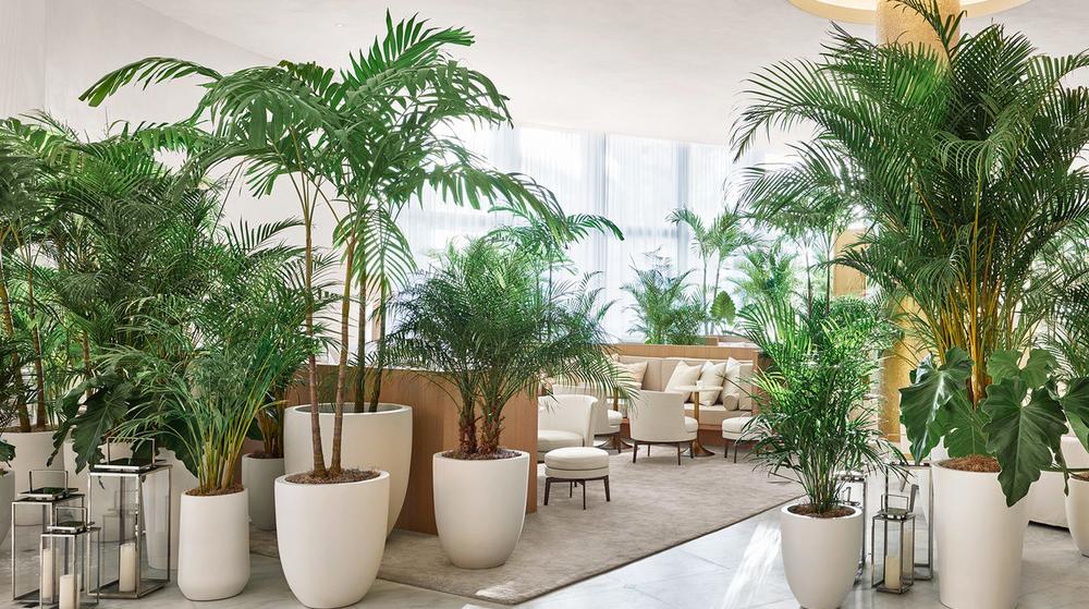 Гостиница для домашних растений